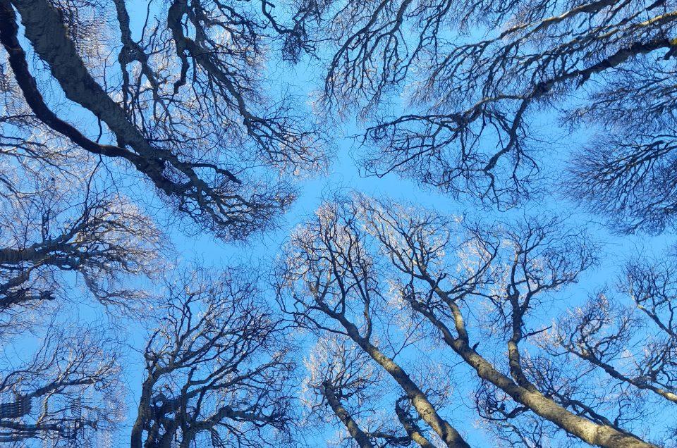 """L'exposition """"dans la peau d'un arbre"""""""
